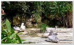Zoo Amnéville-0063