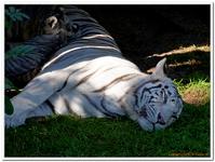Zoo Amnéville-0069