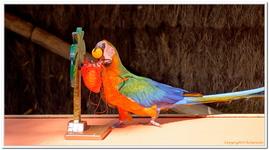 Zoo Amnéville-0085