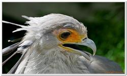 Zoo Amnéville-0111