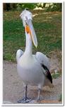 Zoo Amnéville-0115
