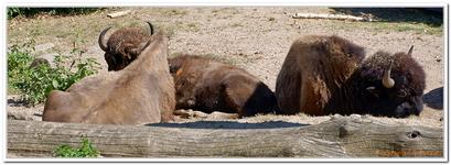 Zoo Amnéville-0120