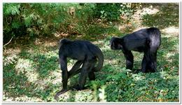 Zoo Amnéville-0124