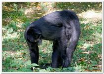 Zoo Amnéville-0125