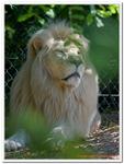 Zoo Amnéville-0127