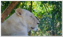 Zoo Amnéville-0128