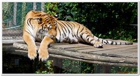 Zoo Amnéville-0132