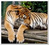 Zoo Amnéville-0133