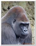Zoo Amnéville-0169