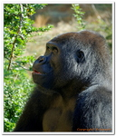 Zoo Amnéville-0178