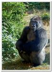 Zoo Amnéville-0176