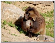 Zoo Amnéville-0184