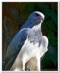 Zoo Amnéville-0188