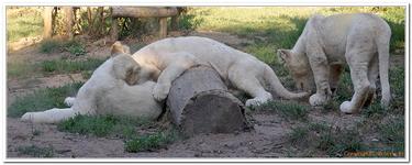 Zoo Amnéville-0199