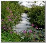 Les Ruisseaux de Coton-0018