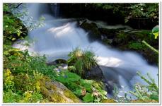 Les Ruisseaux de Coton-0022