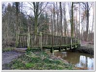 La Forêt du gros Chêne à Haguenau-0009
