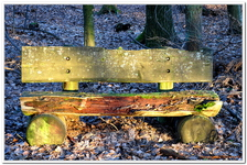 La Forêt du gros Chêne à Haguenau-0006
