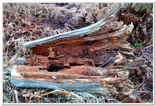 La Forêt du gros Chêne à Haguenau-0010