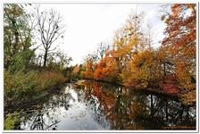 La Forêt d\'Offendorf-0002