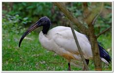Les Oiseaux à Ste-Croix-0018