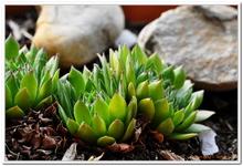 Les Plantes-0001