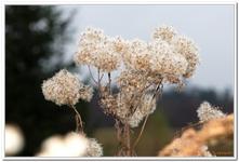 Les Plantes-0003