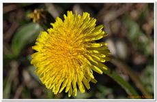 Les Fleurs-0010