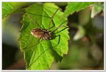 Les Arachnides-0010