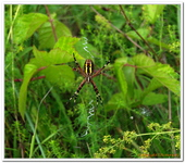 Les Arachnides-0001