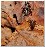 Les Arachnides-0003