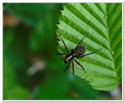Les Arachnides-0004