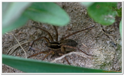 Les Arachnides-0005
