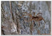 Les Arachnides-0007