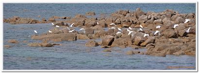 Oiseaux du bord de Mer-0033