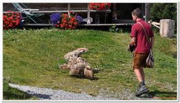 Greifvogelschau Hochalm-0024